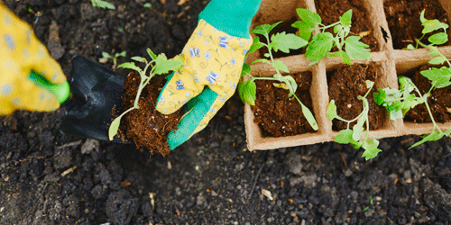 Gardening is fun to do with your spouse, make it into a date night!